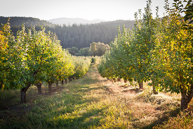 Events at Apple Farm - Philo, United States | vacation home rentals